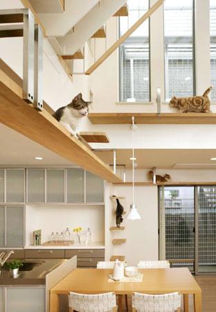 Игровые комплексы для котят