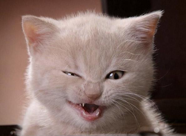 Коты и кошки перевод