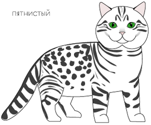 пятнистый окрас spotted tabby